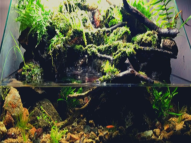 アクアテラリウムで魚だけでなく観葉植物もおしゃれに育ててみよう