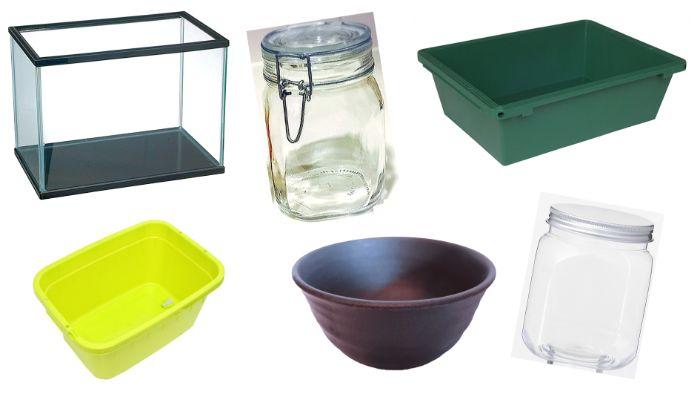 メダカは水槽やプラケース、鉢やタライ、トロ舟、瓶やボトルなどで飼育が可能