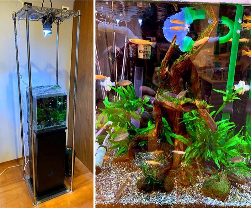 30cmキューブ水槽でメダカや川魚などの日淡を飼育