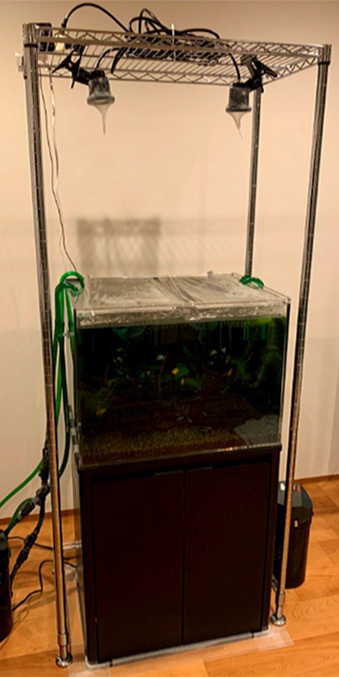 水槽用バックスクリーンを使用すると水槽内は若干暗くなる