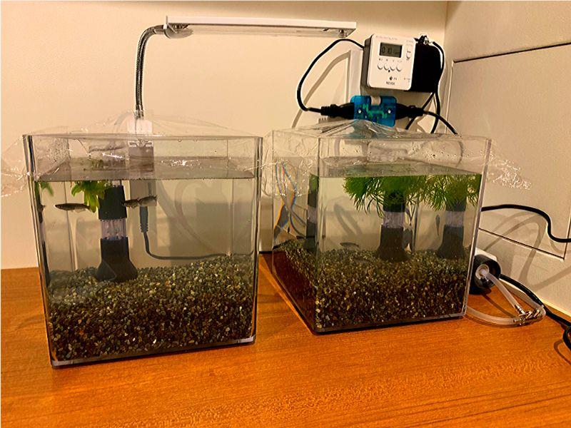 超小型水槽でアクアリウムを始める場合の初期費用