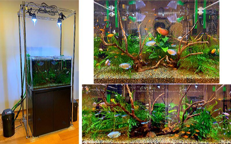60cmワイド水槽で熱帯魚を飼育