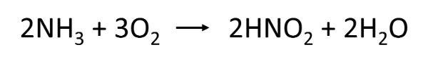 水槽内の水の浄化サイクル③:アンモニアを分解して亜硝酸に