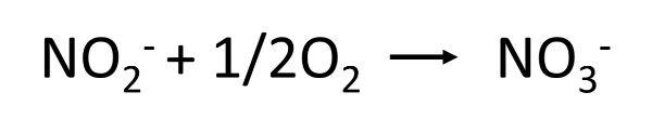 水槽内の水の浄化サイクル④:亜硝酸を分解して硝酸に