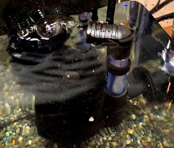 スポンジフィルターは水面を泡で揺らすので酸素供給が可能