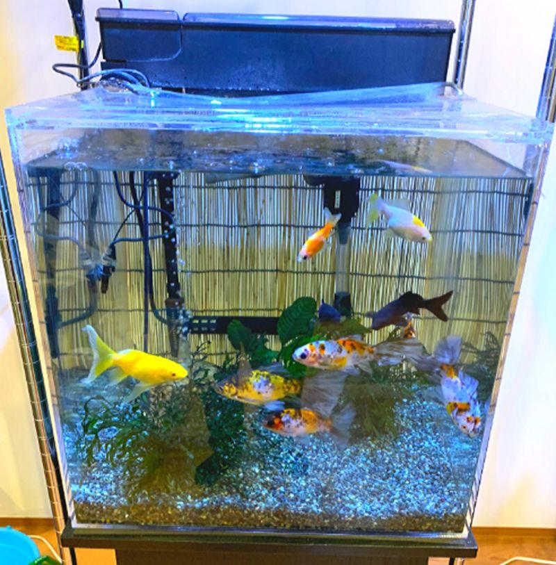 上部式フィルターは金魚水槽にも最適