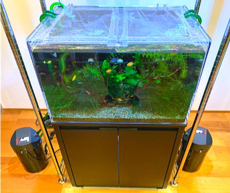 外部式フィルターを使用した水槽