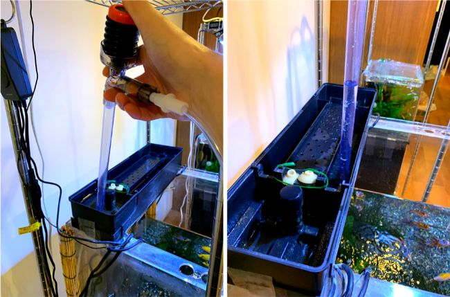 水換え用ポンプやスポイトで上部フィルターの濾過槽を掃除する