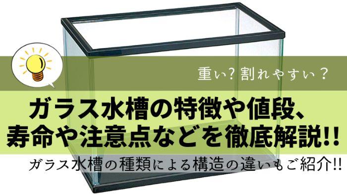 ガラス水槽の特徴や値段、寿命や注意点などを徹底解説!!