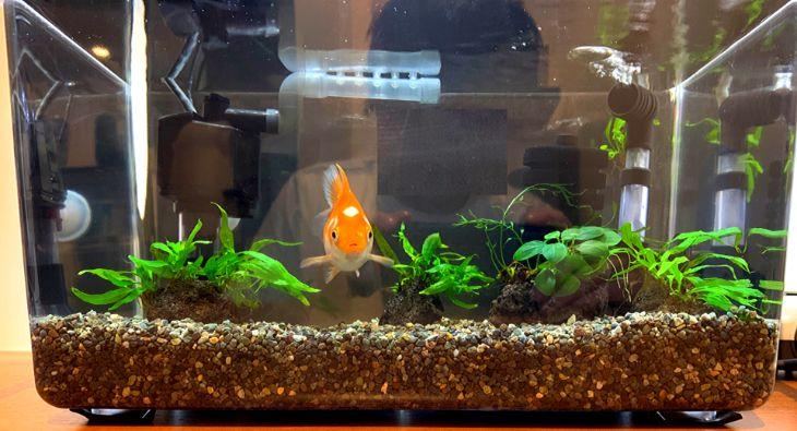 スポンジフィルターと底面式フィルターで楽々金魚飼育