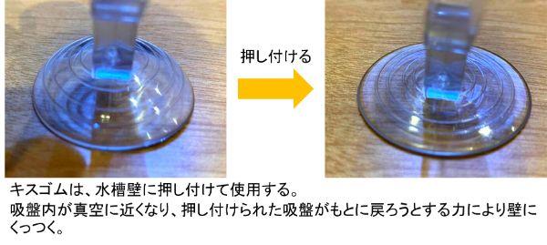 キスゴムは吸盤を水槽壁に押し付けて吸盤内を真空にすることによりくっつける