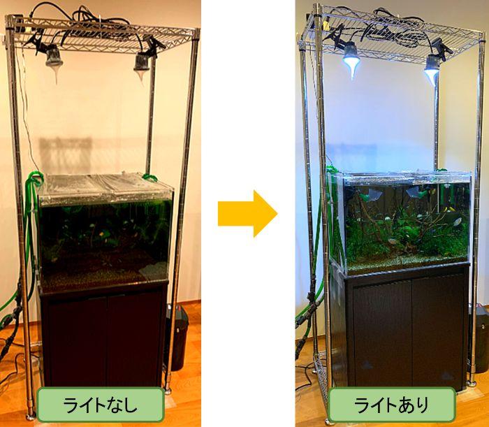 水槽用ライト(照明)を使用すると水槽が明るくなり観賞しやすくなる