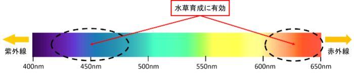 水槽用ライトを選ぶ際には光の波長やスペクトルにも注目しよう。特に水草水槽では赤色や青色の波長の光が光合成に重要。