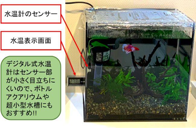 デジタル式水温計はセンサー部が小さく目立ちにくいので、ボトルアクアリウムや超小型水槽にもおすすめ