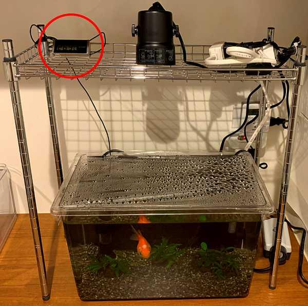 水槽用水温計を使用して水槽の水の温度を把握する