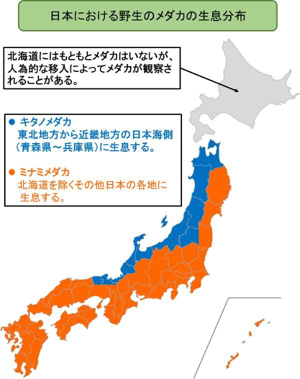 日本における野生のメダカの生息分布