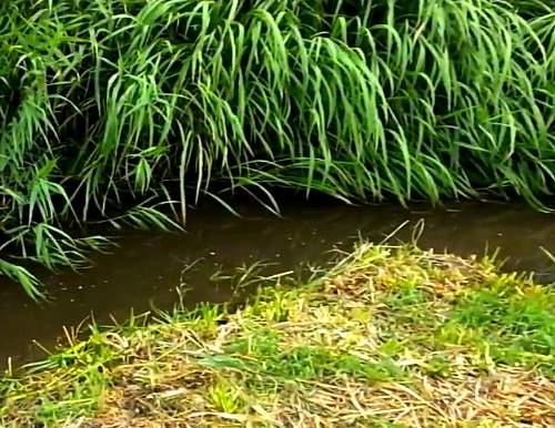 メダカは小さな池や沼、流れの強くない小川や田んぼの用水路などに生息する