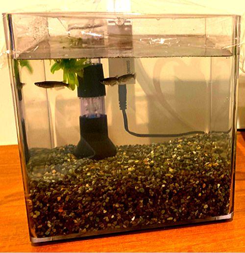 メダカは少数1匹~3匹程度であればボトルアクアリウムや超小型水槽(5ℓ未満)でも飼育が可能